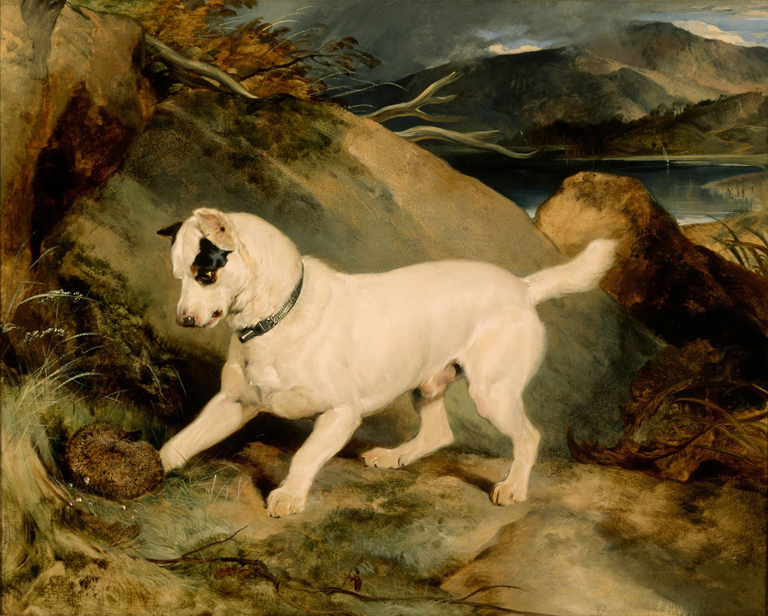 Edwin Landseer (English, 1802–1873), Portrait of a Terrier, The Property of Owen Williams, ESQ., M.P. (Jocko with a Hedgehog), 1828. Oil on canvas; 39 15/16 x 49 3/16 in. (101.44 x 124.94 cm). Milwaukee Art Museum, Gift of Erwin C. Uihlein M1967.79 Photo credit Larry Sanders