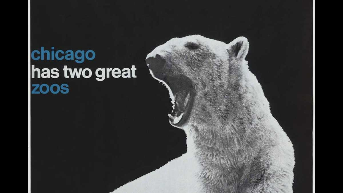 Polar bear growling next to text that says Chicago has two great zoos
