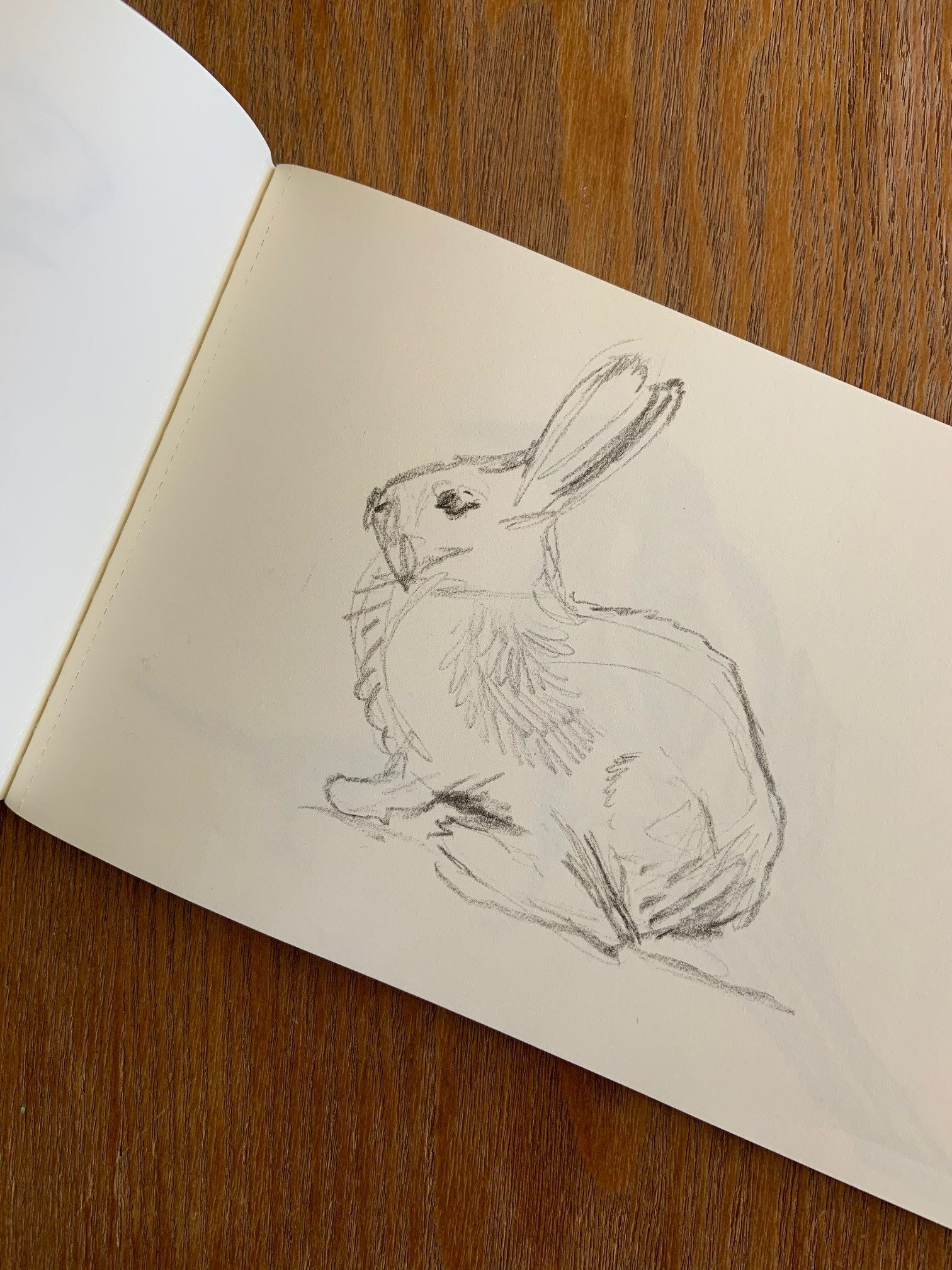Rabbit sketched on a piece of paper