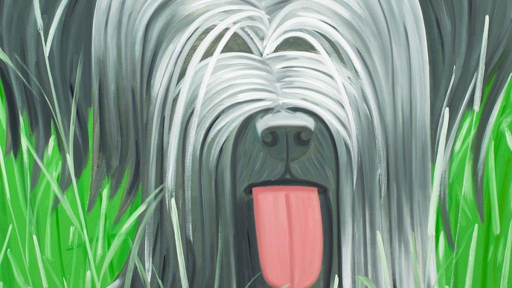 Gray, long-haired dog sitting in a field by the lake with its tongue out